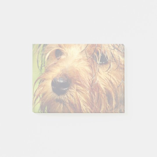 Adorable Terrier Dog with a Wet Face Post-it