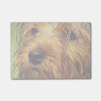 Adorable Terrier Dog with a Wet Face Post-it Notes