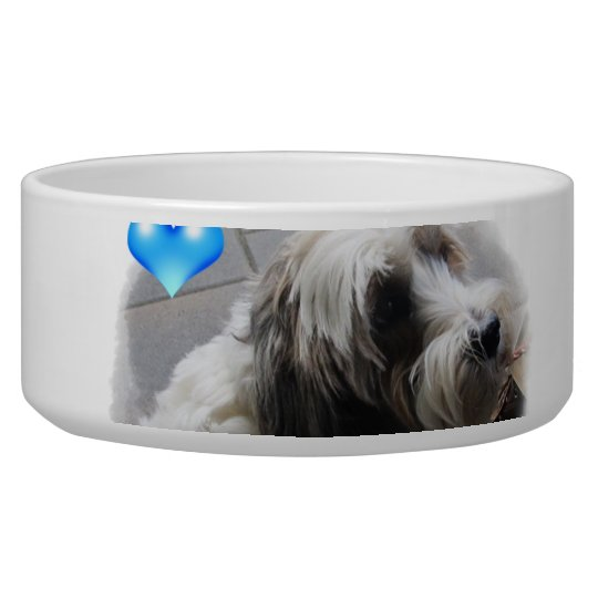 Adorable Tibetan Terrier with a heart dog food
