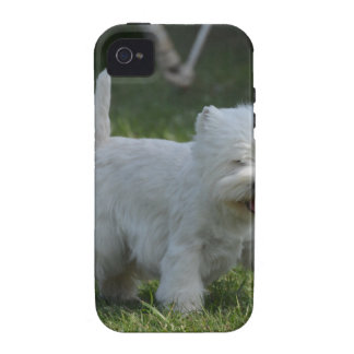 Adorable West Highland Terrier iPhone 4/4S Cases