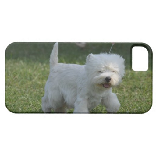 Adorable West Highland Terrier iPhone 5/5S Covers