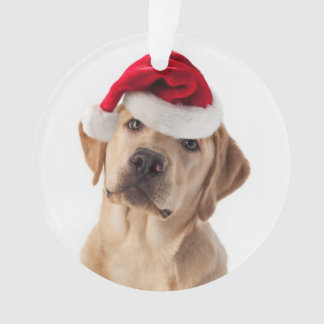 Adorable Yellow Lab with Santa Hat Ornament