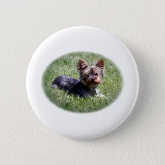 Adorable Yorkie 6 Cm Round Badge
