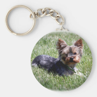 Adorable Yorkie Key Ring