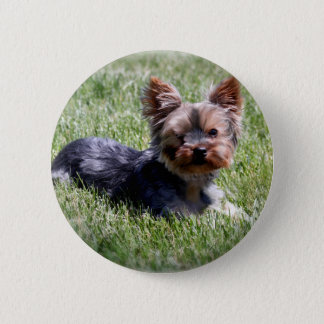 Adorable Yorkie Multiple Products Selected 6 Cm Round Badge