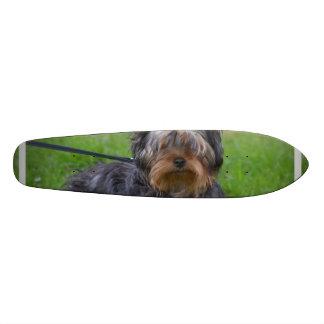 Adorable Yorkshire Terrier Skate Board