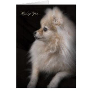 Adorably Cute Posing Pomeranian Puppy Card