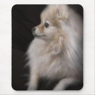 Adorably Cute Posing Pomeranian Puppy Mouse Mat
