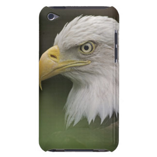 Adult Bald Eagle Portrait, Haliaeetus Barely There iPod Case