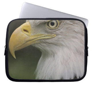Adult Bald Eagle Portrait, Haliaeetus Laptop Sleeve