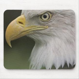 Adult Bald Eagle Portrait, Haliaeetus Mouse Mat