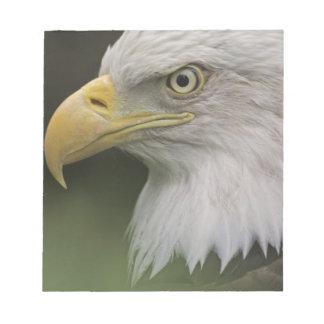 Adult Bald Eagle Portrait, Haliaeetus Notepad