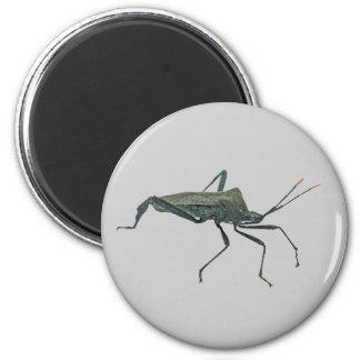 Adult Black Assasin Bug (Reduviid) Items 6 Cm Round Magnet