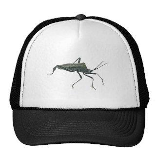 Adult Black Assasin Bug (Reduviid) Items Cap