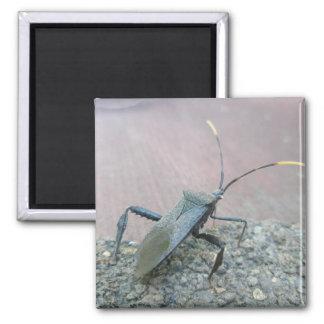 Adult Black Assasin Bug (Reduviid) Items Square Magnet