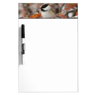 Adult Black-capped Chickadee in Snow, Grand Dry Erase Board