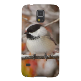 Adult Black-capped Chickadee in Snow, Grand Galaxy S5 Cases
