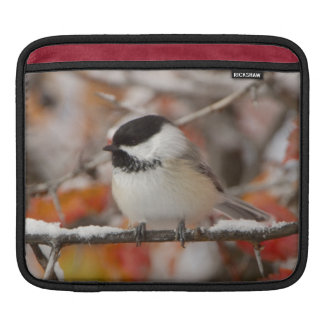 Adult Black-capped Chickadee in Snow, Grand iPad Sleeve
