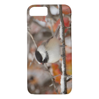 Adult Black-capped Chickadee in Snow, Grand iPhone 8/7 Case