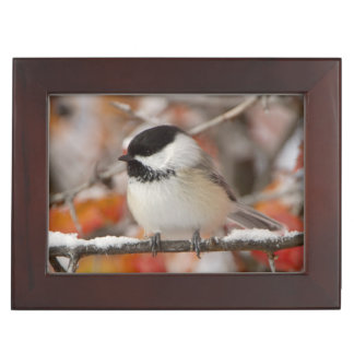 Adult Black-capped Chickadee in Snow, Grand Keepsake Box