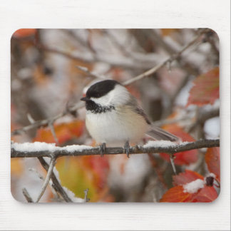 Adult Black-capped Chickadee in Snow, Grand Mouse Mat