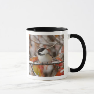 Adult Black-capped Chickadee in Snow, Grand Mug