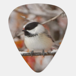 Adult Black-capped Chickadee in Snow, Grand Plectrum