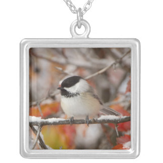Adult Black-capped Chickadee in Snow, Grand Silver Plated Necklace