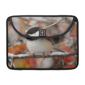 Adult Black-capped Chickadee in Snow, Grand Sleeve For MacBook Pro