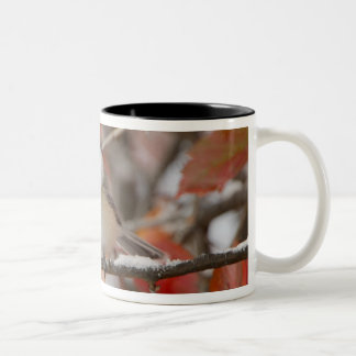 Adult Black-capped Chickadee in Snow, Grand Two-Tone Coffee Mug