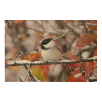 Adult Black-capped Chickadee in Snow, Grand Wood Wall Decor