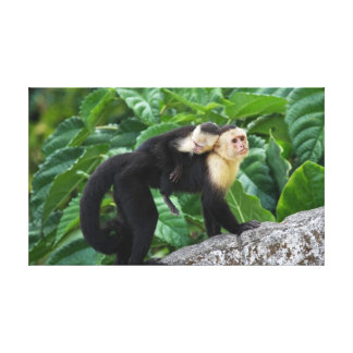 Adult Capuchin Monkey Carrying Baby On Its Back Canvas Print