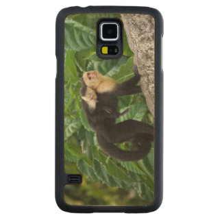 Adult Capuchin Monkey Carrying Baby On Its Back Carved Maple Galaxy S5 Case
