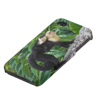 Adult Capuchin Monkey Carrying Baby On Its Back iPhone 4 Cover