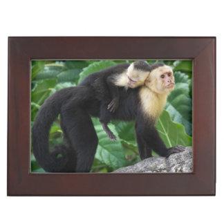 Adult Capuchin Monkey Carrying Baby On Its Back Keepsake Box
