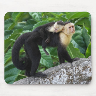 Adult Capuchin Monkey Carrying Baby On Its Back Mouse Mat