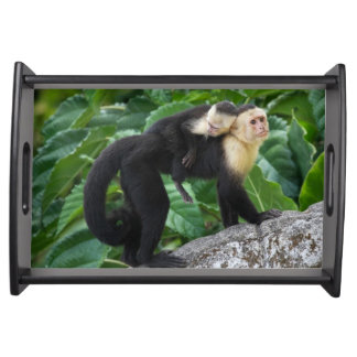 Adult Capuchin Monkey Carrying Baby On Its Back Serving Tray