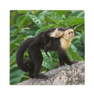 Adult Capuchin Monkey Carrying Baby On Its Back Wood Coaster