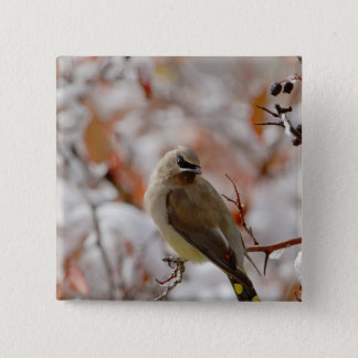 Adult Cedar Waxwing on hawthorn with snow, 15 Cm Square Badge
