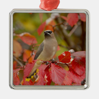 Adult Cedar Waxwing on hawthorn with snow, 2 Christmas Ornament