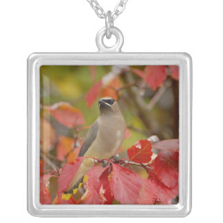 Adult Cedar Waxwing on hawthorn with snow, 2 Silver Plated Necklace