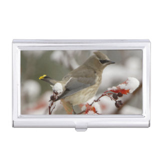 Adult Cedar Waxwing on hawthorn with snow, 3 Business Card Holder