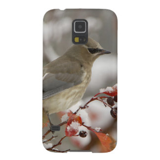 Adult Cedar Waxwing on hawthorn with snow, 3 Cases For Galaxy S5