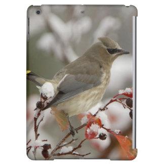 Adult Cedar Waxwing on hawthorn with snow, 3 iPad Air Case