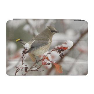 Adult Cedar Waxwing on hawthorn with snow, 3 iPad Mini Cover