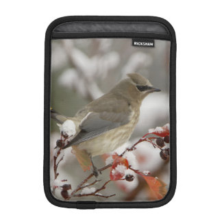 Adult Cedar Waxwing on hawthorn with snow, 3 iPad Mini Sleeve