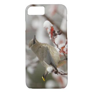 Adult Cedar Waxwing on hawthorn with snow, 3 iPhone 8/7 Case