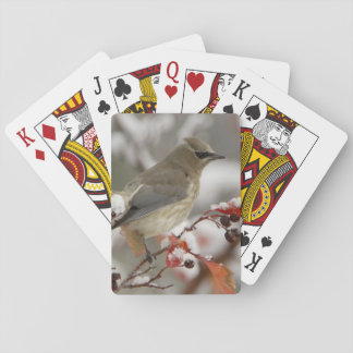 Adult Cedar Waxwing on hawthorn with snow, 3 Playing Cards
