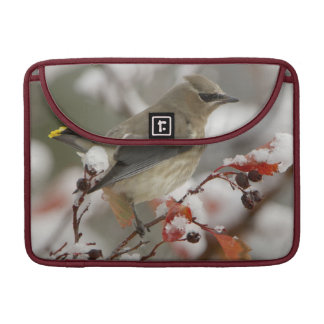 Adult Cedar Waxwing on hawthorn with snow, 3 Sleeve For MacBook Pro