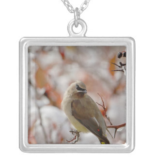 Adult Cedar Waxwing on hawthorn with snow, Silver Plated Necklace